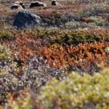 BioFoto Norge (67)