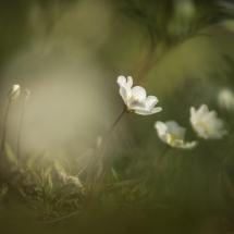 BioFoto Norge (93)