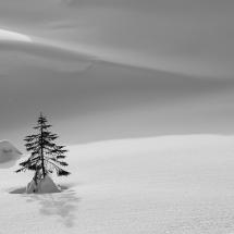 79_001 - terje.aveberg. BFS. tre i snøen