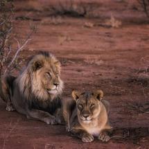 85_Janne_Monsen_hordaland_Lion_King
