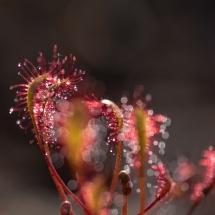 BioFoto-168