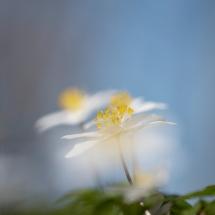 BioFoto-195