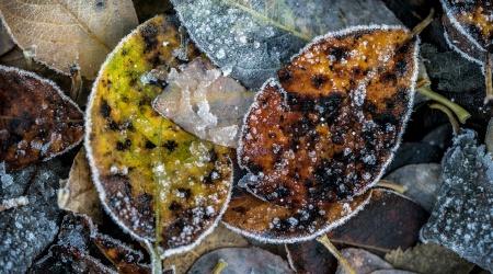 Foto: Linda Bjørgan, BioFoto Midt-Norge