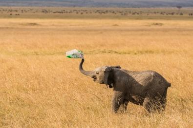 Elefanten leker med plastposen_Sven Fredriksen_Nordland