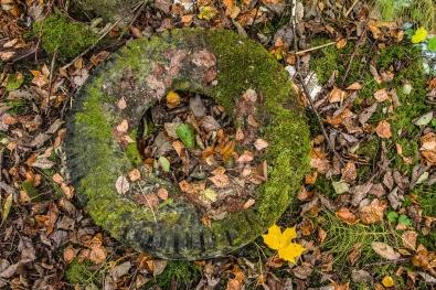 Hjul i skogen_Per Inge Værnesbranden_Midt-Norge-4285