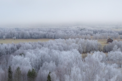 Geir-Ludvigsen_indreostland_eventyrskogen