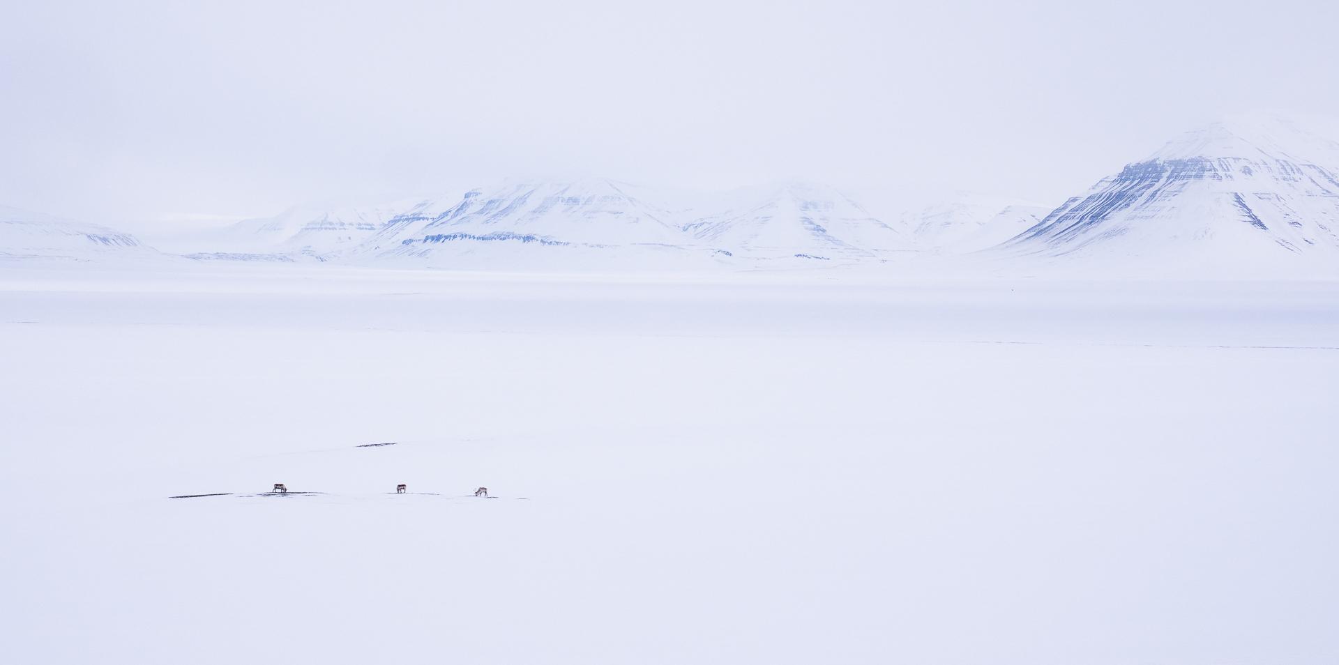 JanNordvaalen_indreostland_Svalbard
