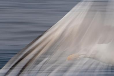 Kristin-Sandstrak Nordland_Måse-i-farta