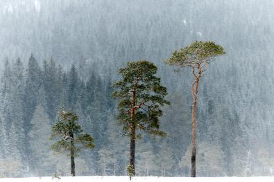 robertpedersen_midtnorge_snøvær